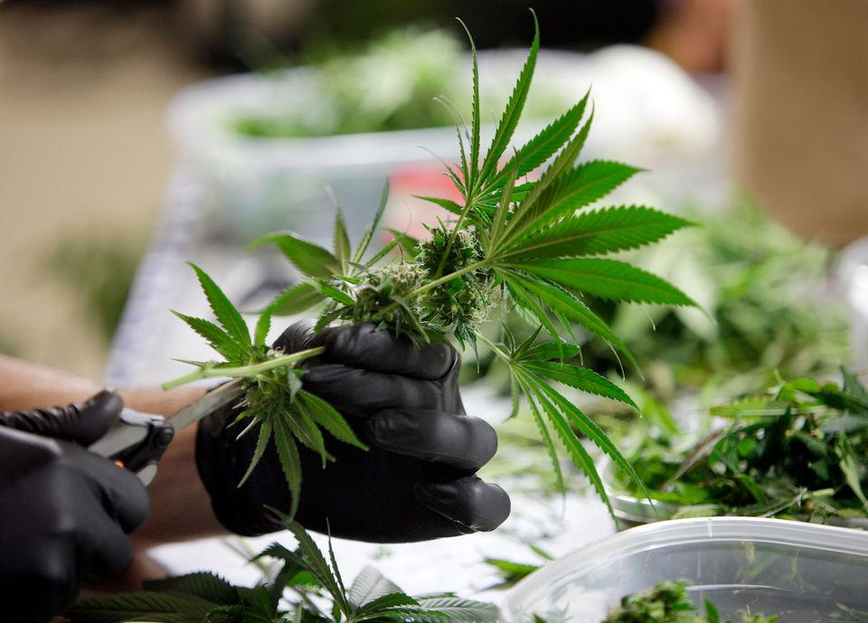 marijuana clinic