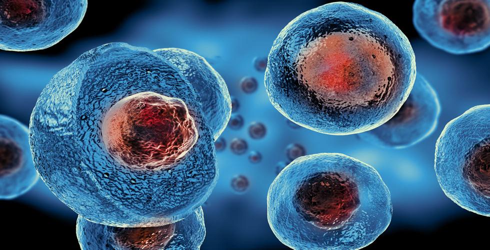 rsz_stem_cells