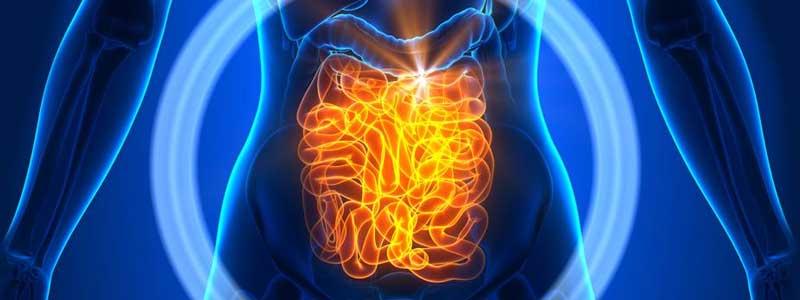 FAQs-digestive