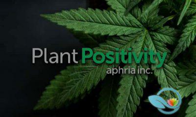 Aphria Creates New Social Responsibility Impact Program Plant Positivity to Focus on Education
