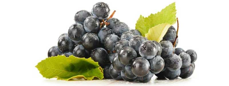 Benefits-of-Resveratrol