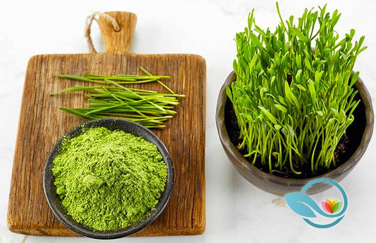 Best-Wheatgrass-Supplements-of-2019