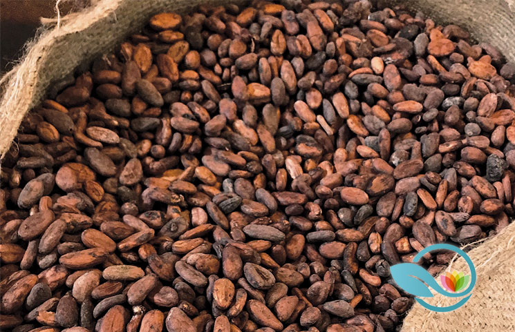 Cocoa vs Cacao: Knowing the Differences of These Chocolate-Related Terms
