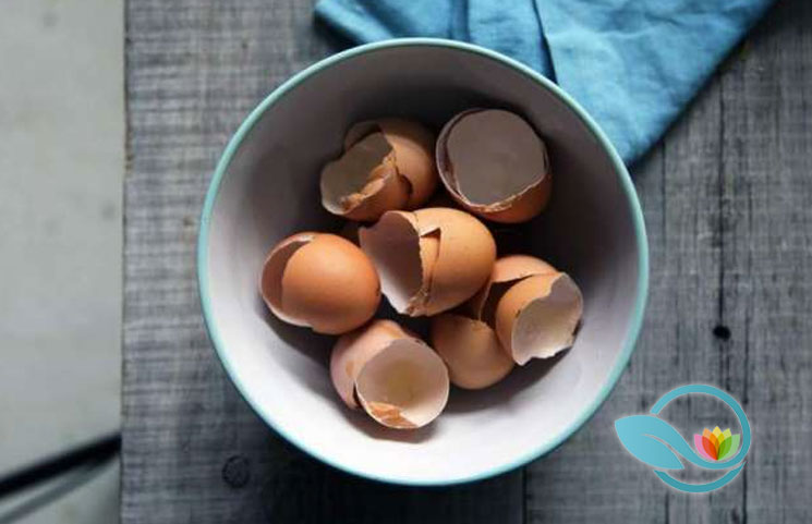 New-Study-Reveals-Eggshells-as-Being-Effective-in-Repairing-Damaged-Bones