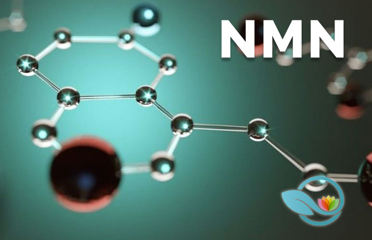 What-is-Nicotinamide-Mononucleotide-How-NMN-Helps-NAD-Nicotinamide-Adenine-Dinucleotide-Production
