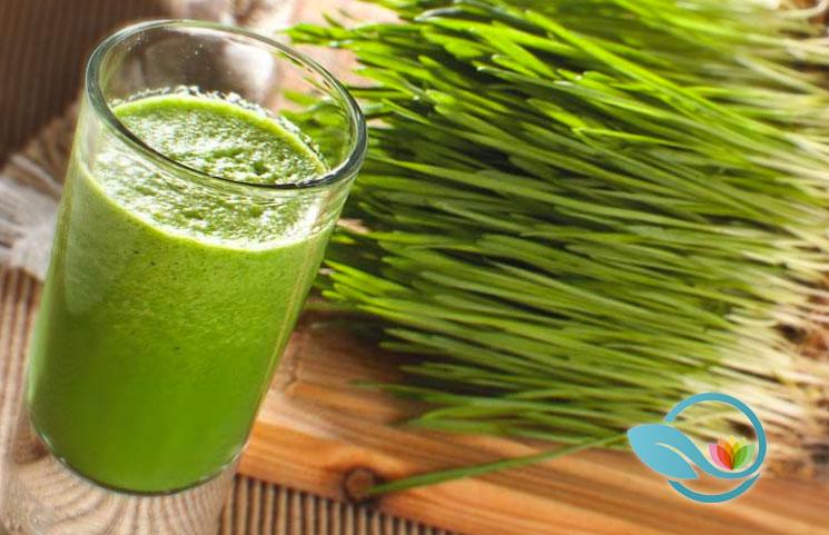 Wheatgrass-Supplements