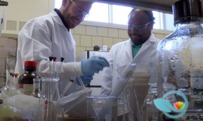 University of Findlay Pharmacy Students Work on Glioblastoma Treatment with Compound Found in Curry