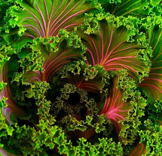 indole-fatty-liver-vegetable