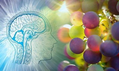 Resveratrol May Improve Cognitive Performance in Postmenopausal Women