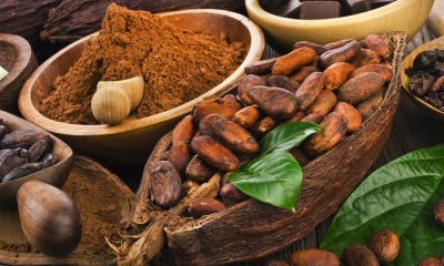 Cocoa Flavanols Ignite Brain Cognition and Oxygenation in Adults